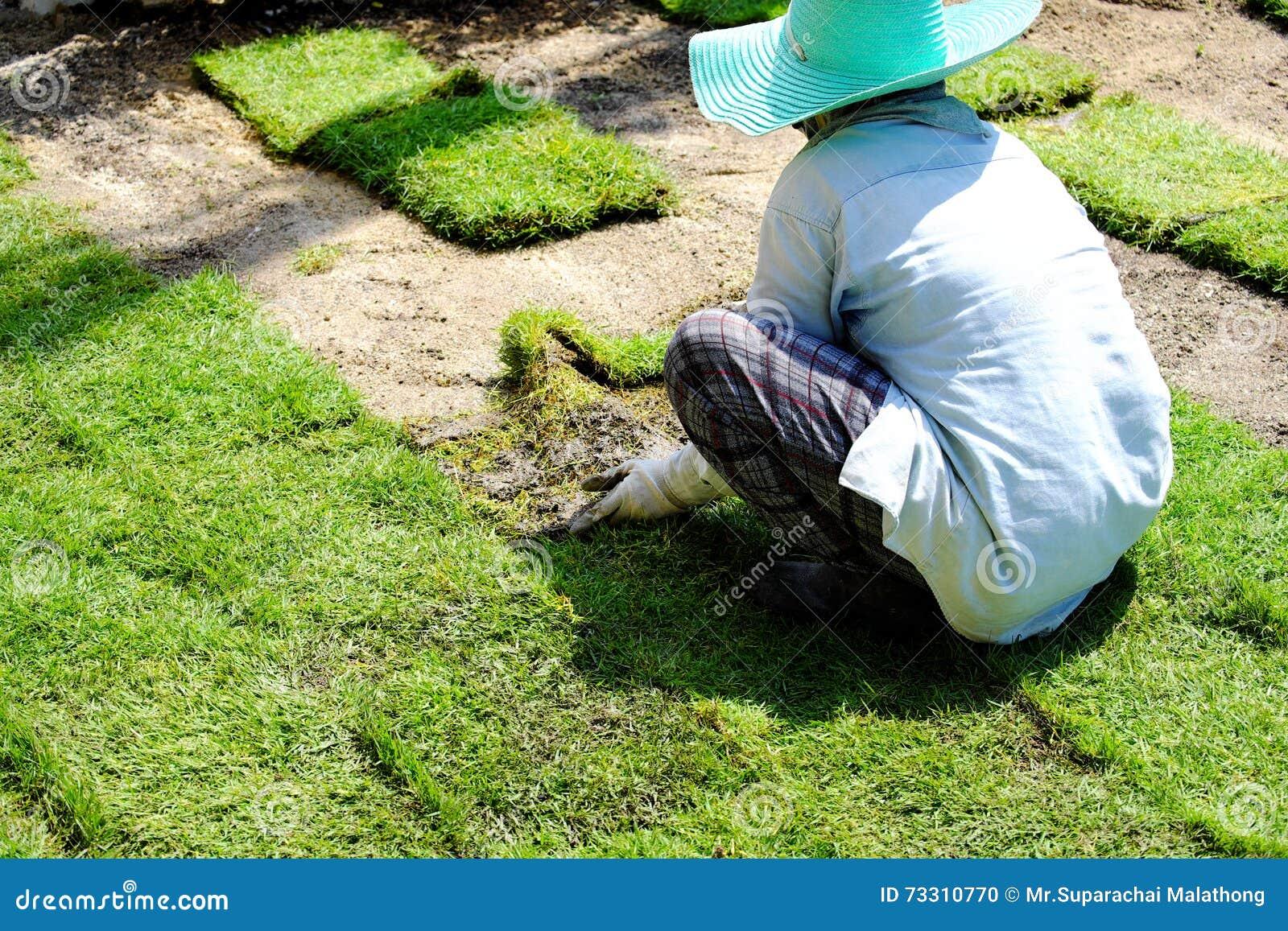 Gardeners are planting grass