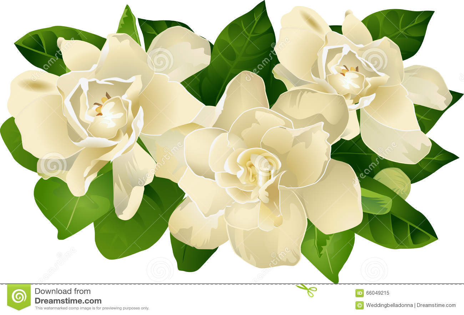 0118160bc106 Gardenia Floral Grouping stock illustration. Illustration of ...