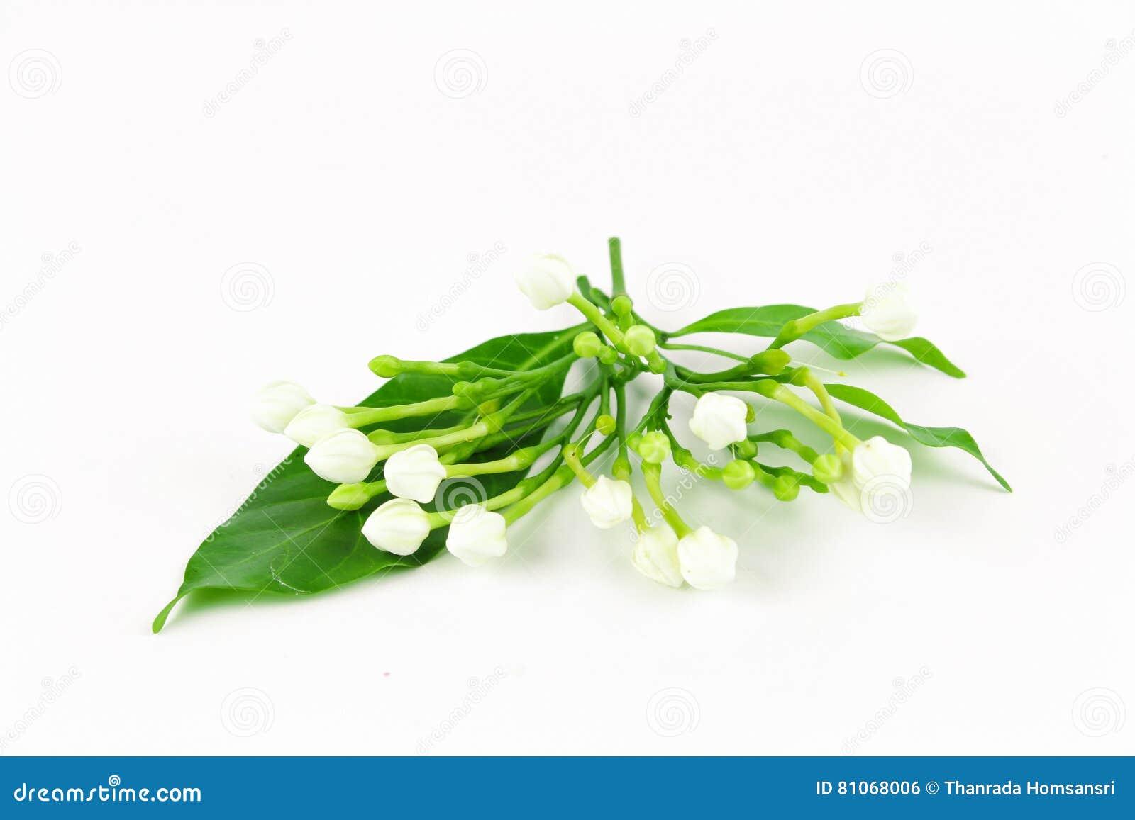 Gardenieblumenglas