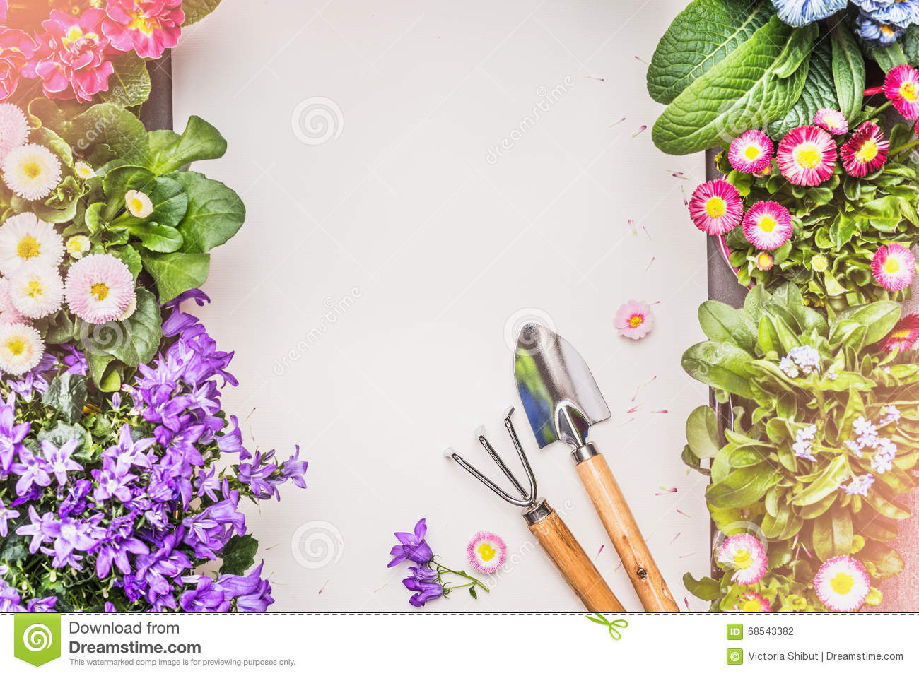 gardening background with various garden flowers and tools on gray concrete top view stock. Black Bedroom Furniture Sets. Home Design Ideas