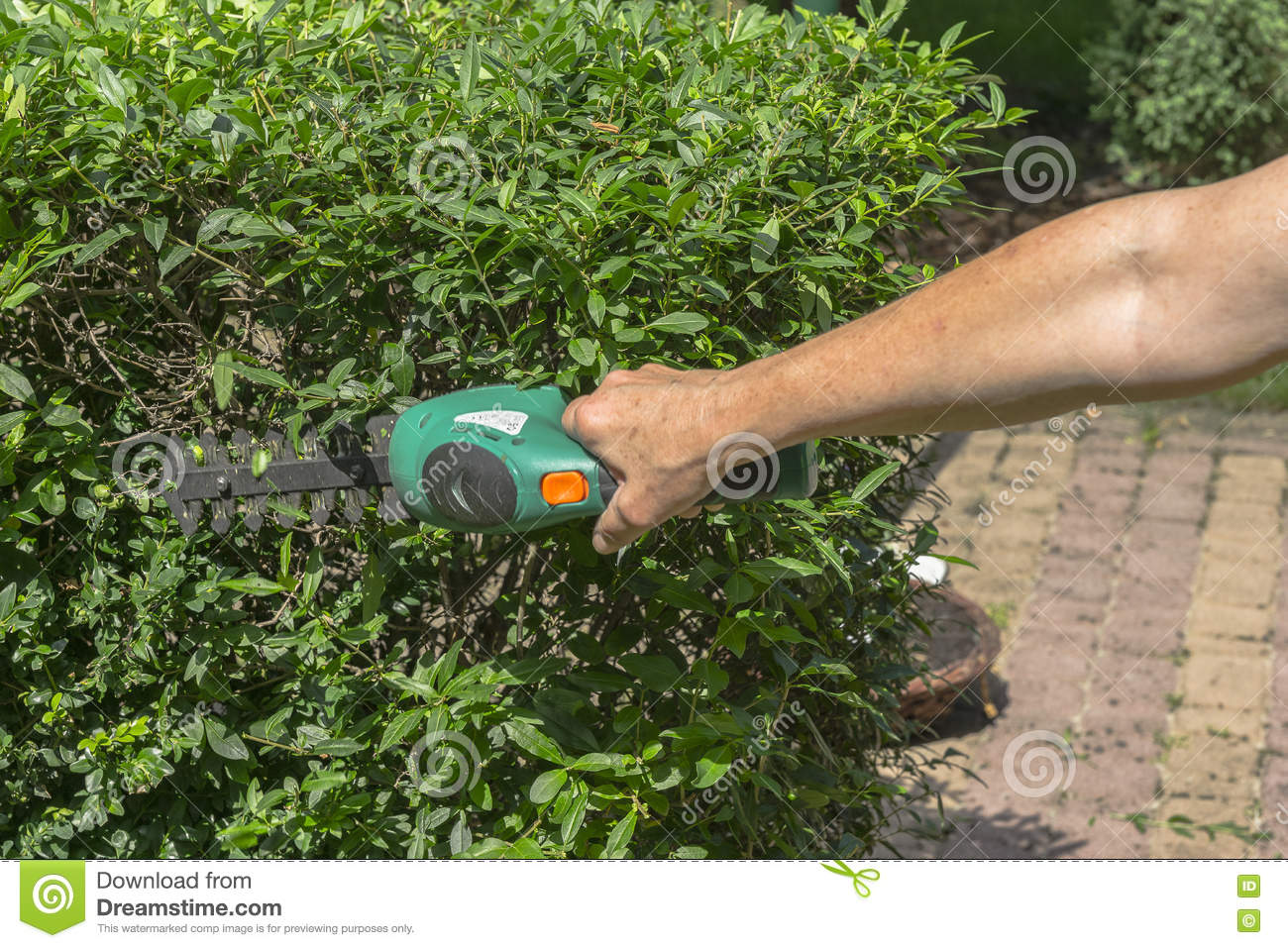 How to choose a garden trimmer