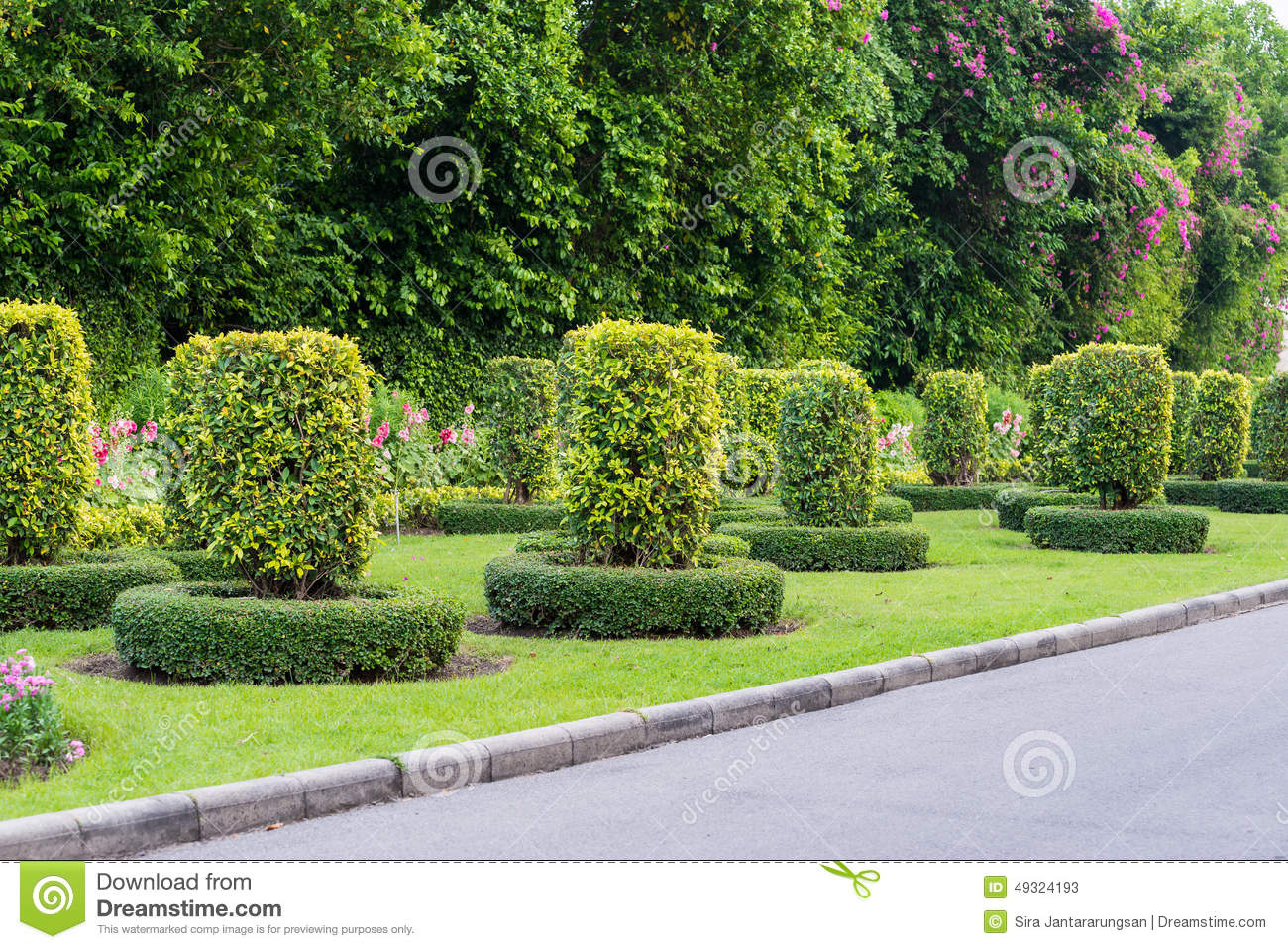 Gardening and landscaping with decorative trees stock photo image 49324193 - Decorative small trees for landscaping ...
