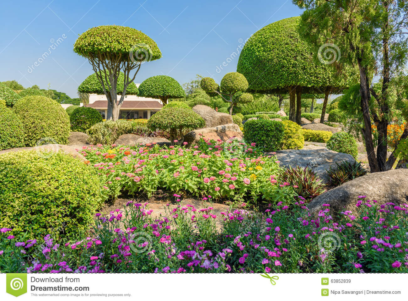Gardening and landscaping stock photo image 63852839 - Decorative small trees for landscaping ...