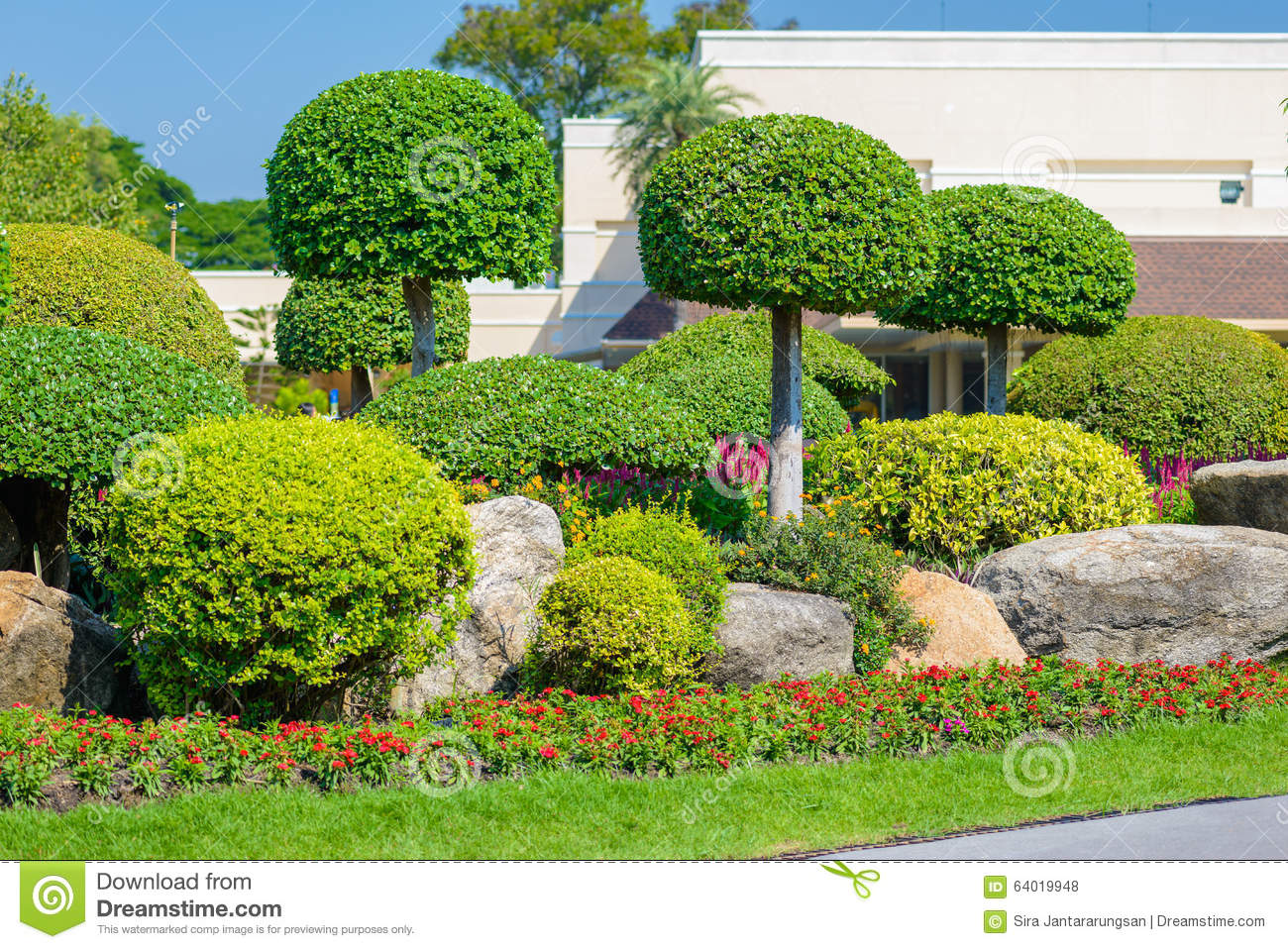 Gardening and landscaping stock photo image 64019948 - Decorative small trees for landscaping ...