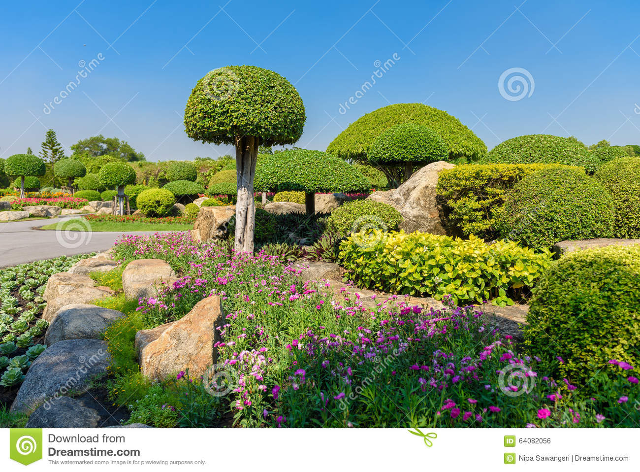 Gardening and landscaping stock photo image 64082056 - Decorative small trees for landscaping ...
