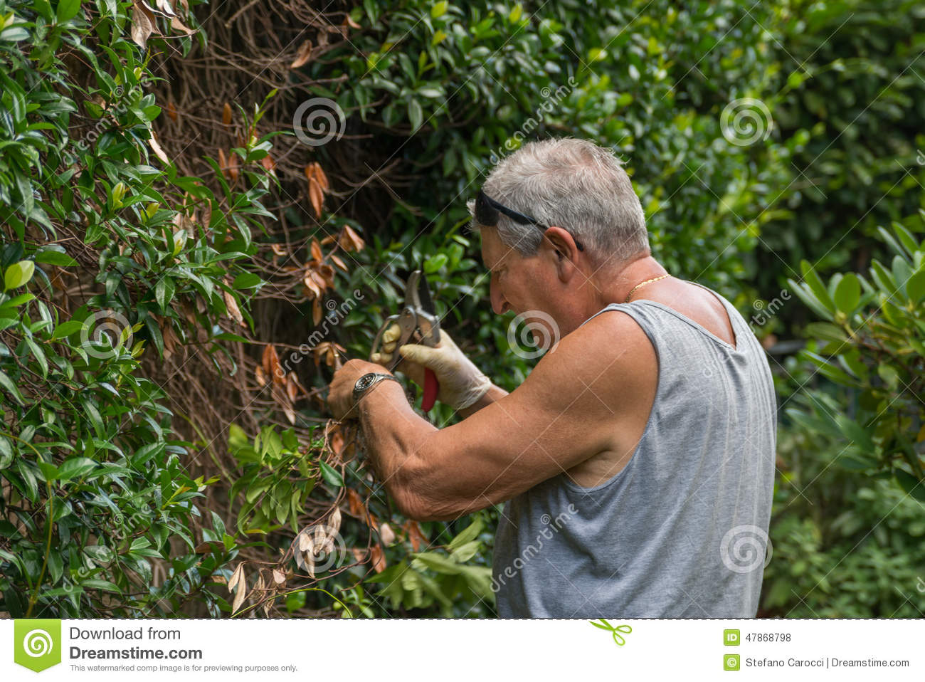 Gardening Stock Photo Image 47868798