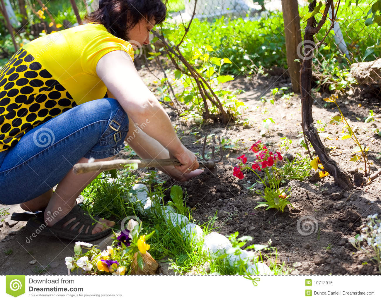 Gardening One Woman Cultivating Flowers Royalty Free