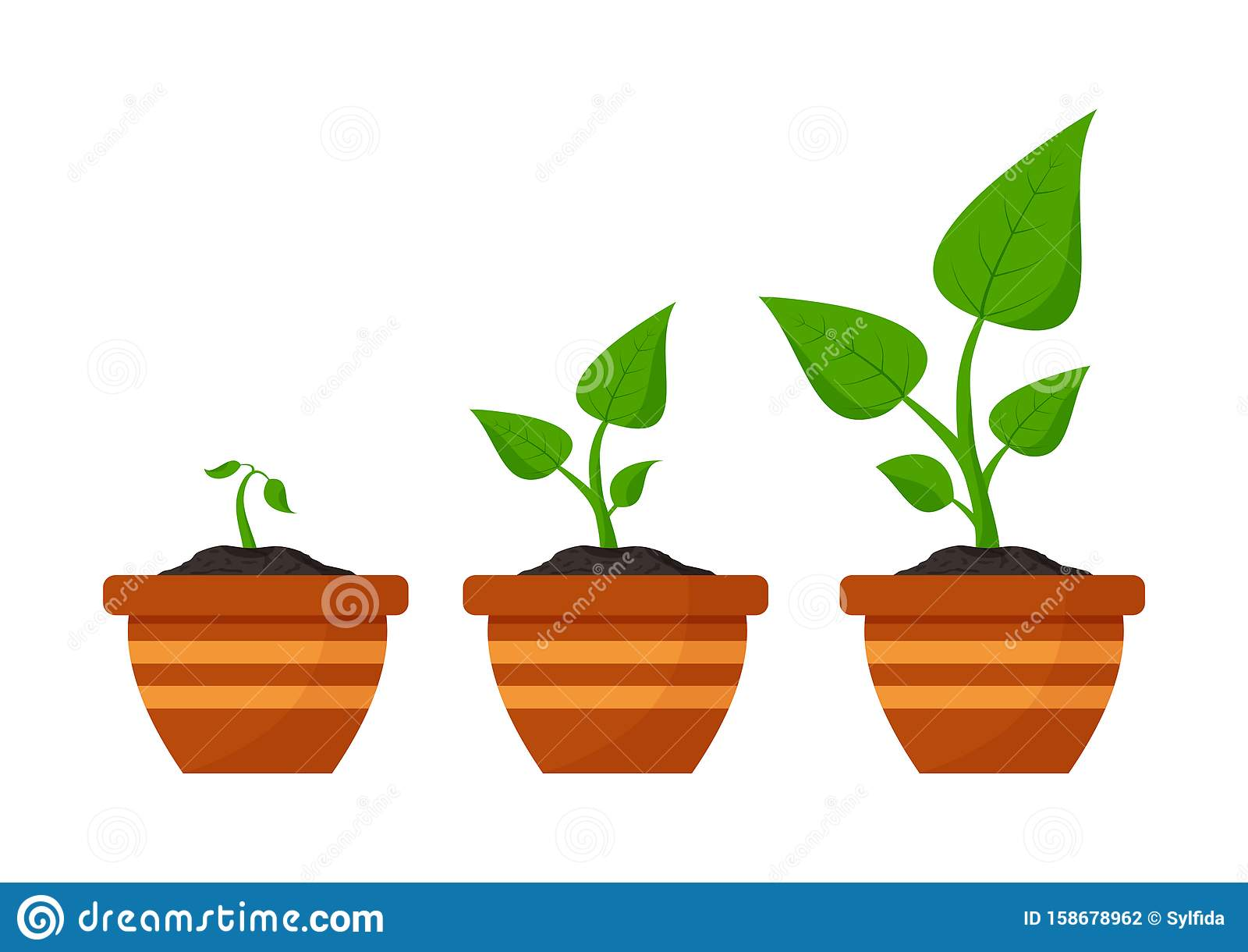 Gardening. Phases plant growing. Planting. Seeds sprout in flower pot. Infographic and evolution concept. Vector