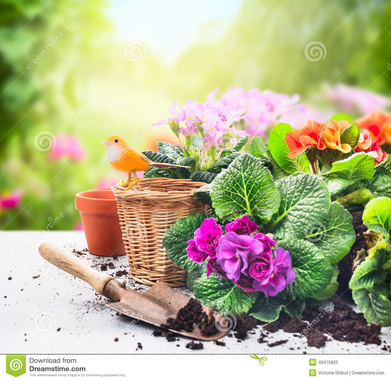 Gardening Set On Table With Flowers Pots Potting Soil
