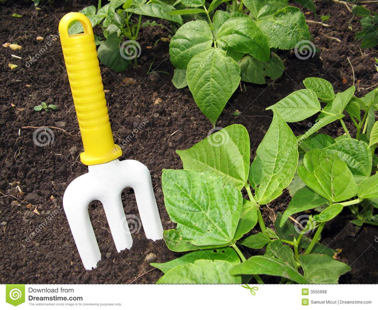Gardening tool royalty free stock photos image 3555898 for Vegetable garden tools