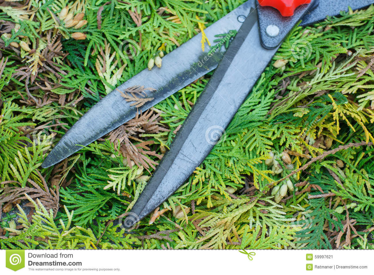 Gardening tool to trim bushes seasonal trimmed bushes for Gardeners trimming tool