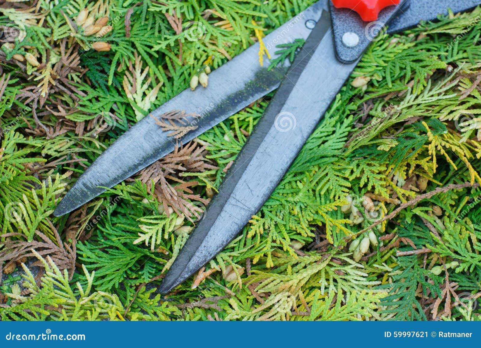 Gardening tool to trim bushes seasonal trimmed bushes for Gardeners trimming tool