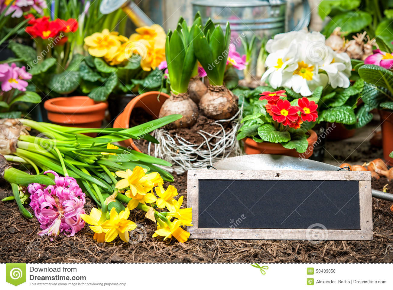 Gardening Stock Photo Image 50433050