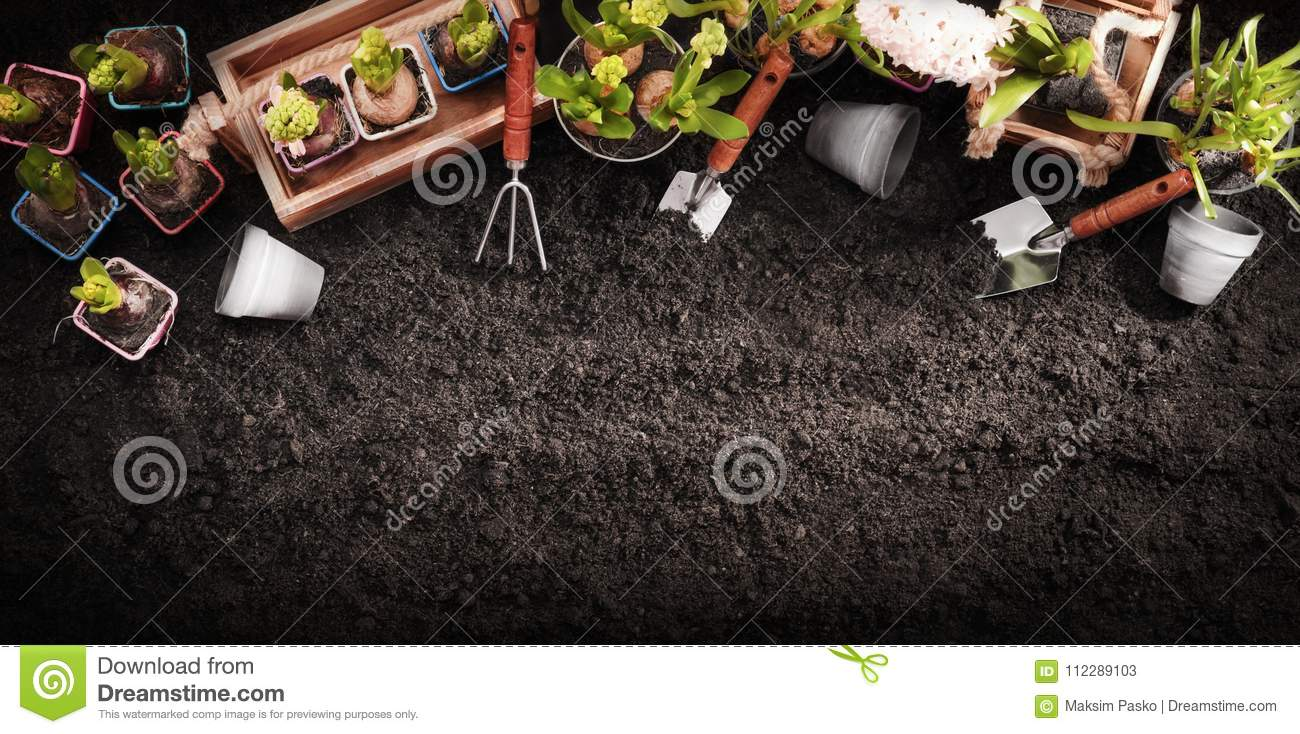 Gardening Tools and Plants. Spring Garden Works Concept