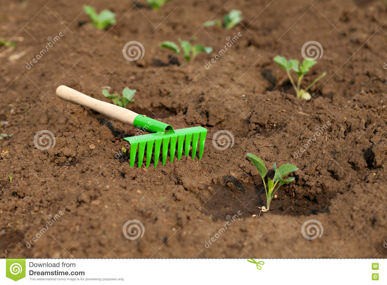 Gardening Tools. Rake On The Earth With Sprouts Cabbage Stock Image ...