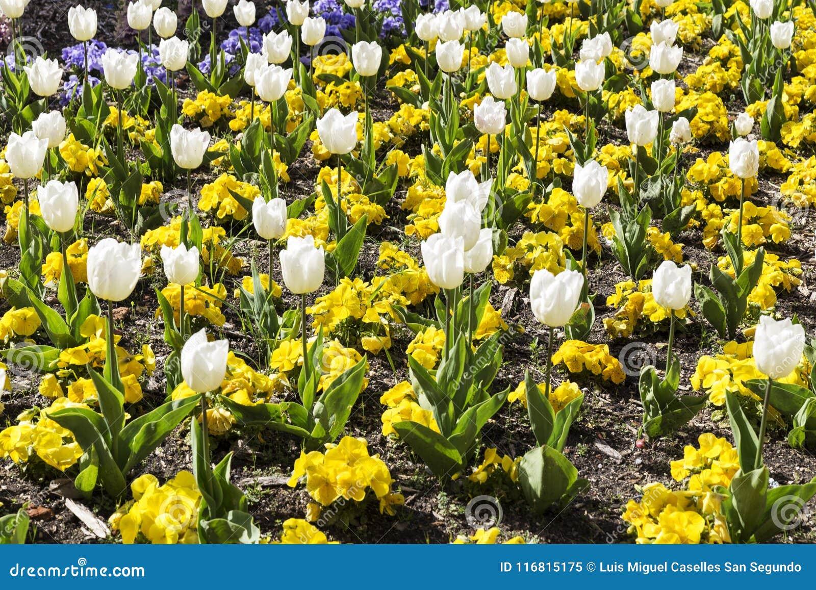 gardin Gardin Flowered With Different Colored Flowers Stock Image   Image  gardin