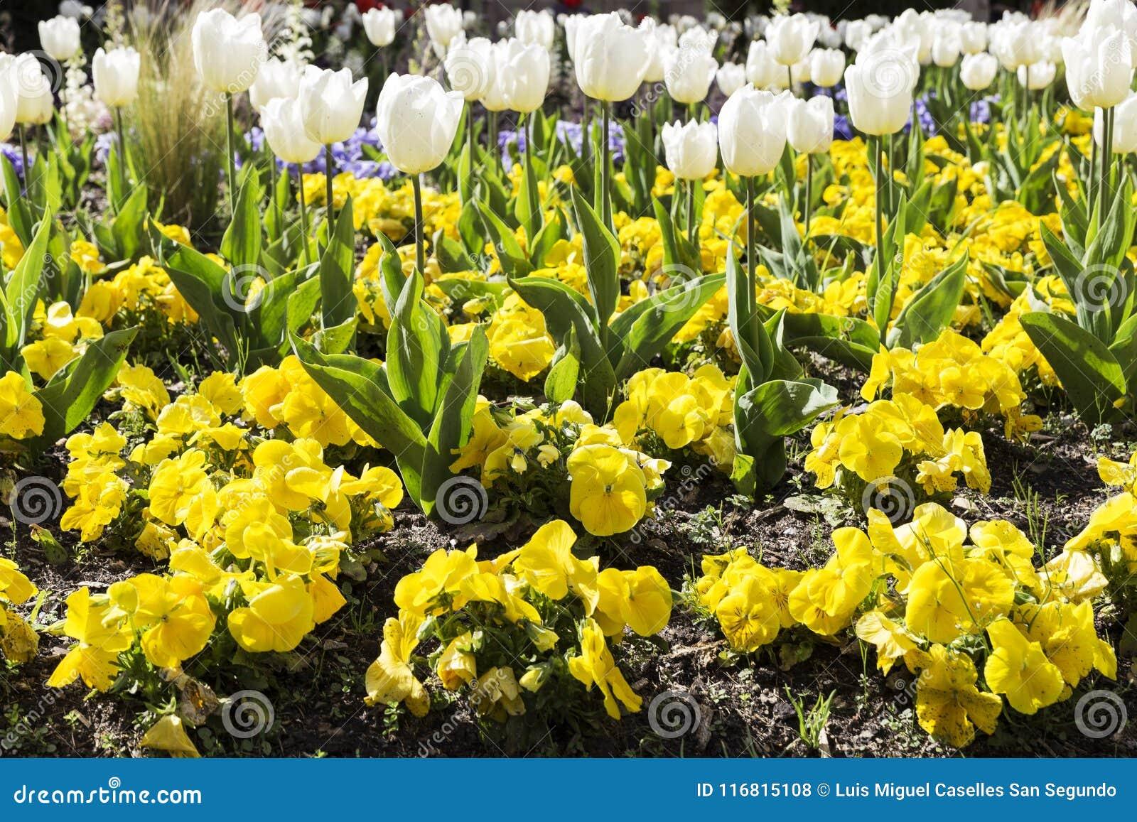 Gardin ha fiorito con differenti fiori colorati