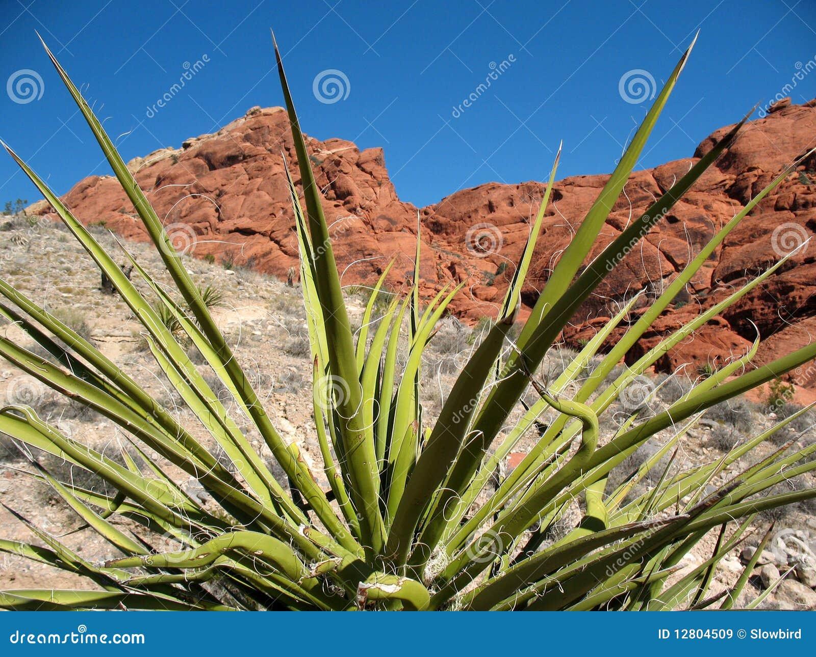 Garganta vermelha Nevada da rocha