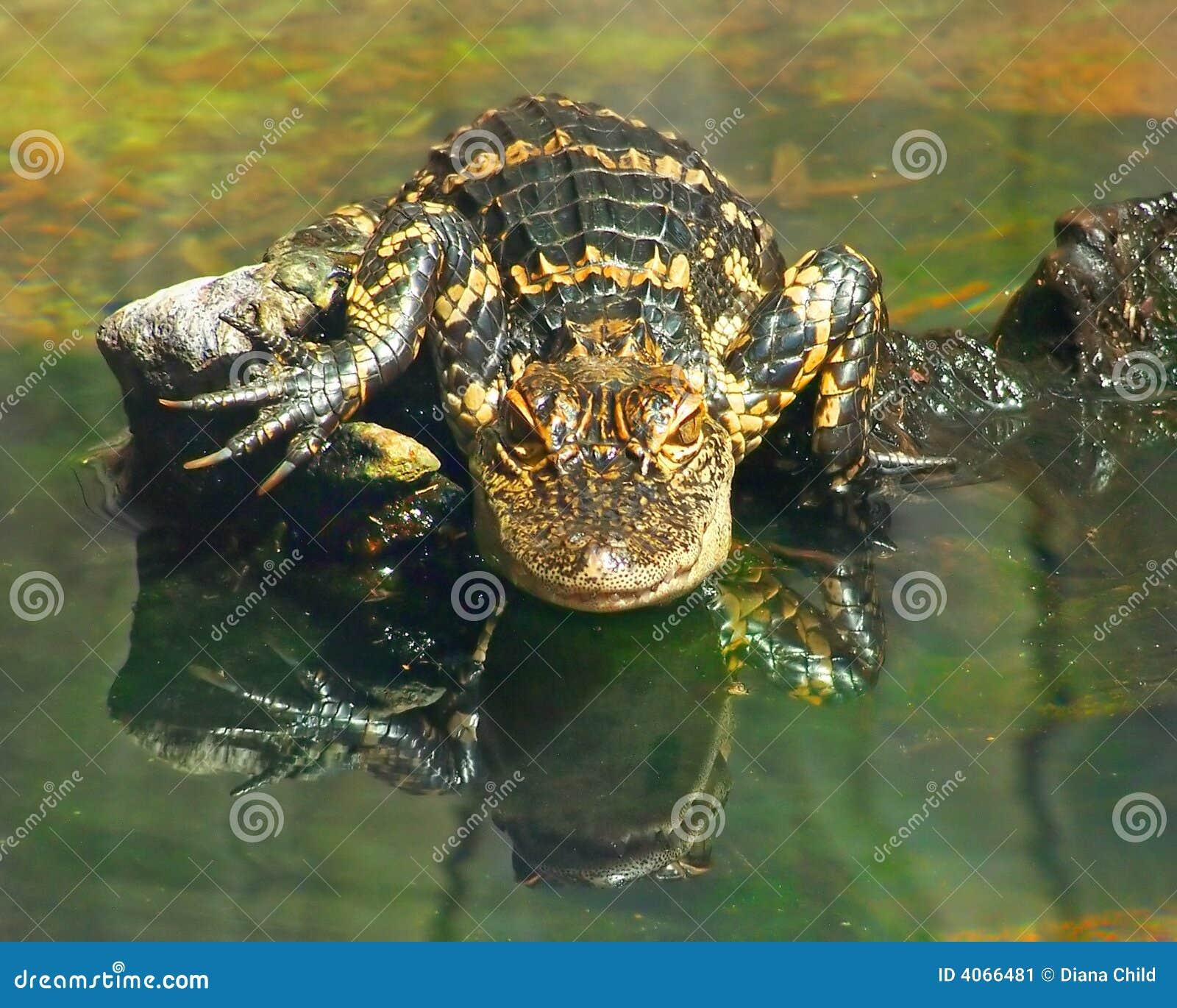 Gargoyle Gator