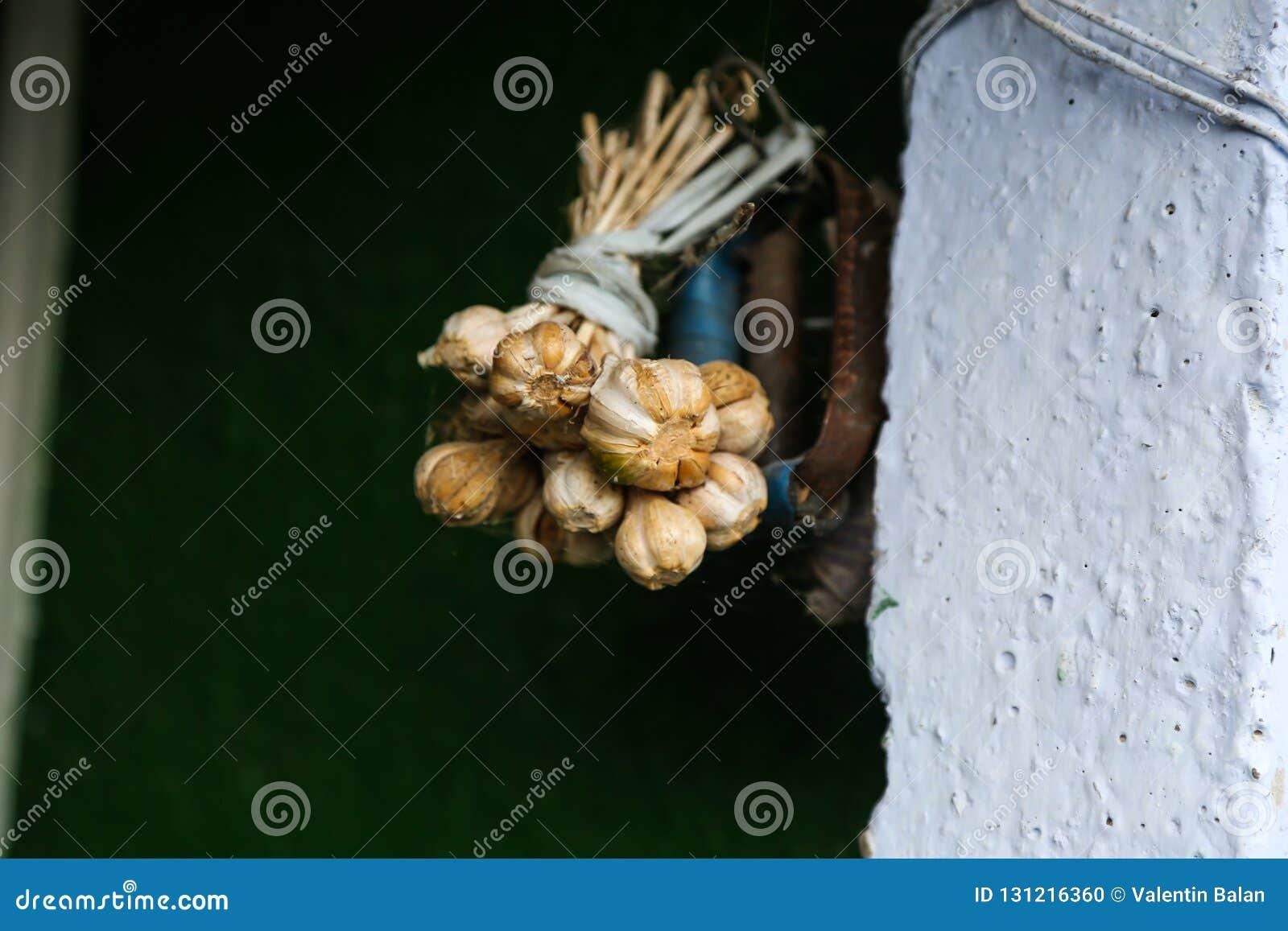 Garlic braid hanging
