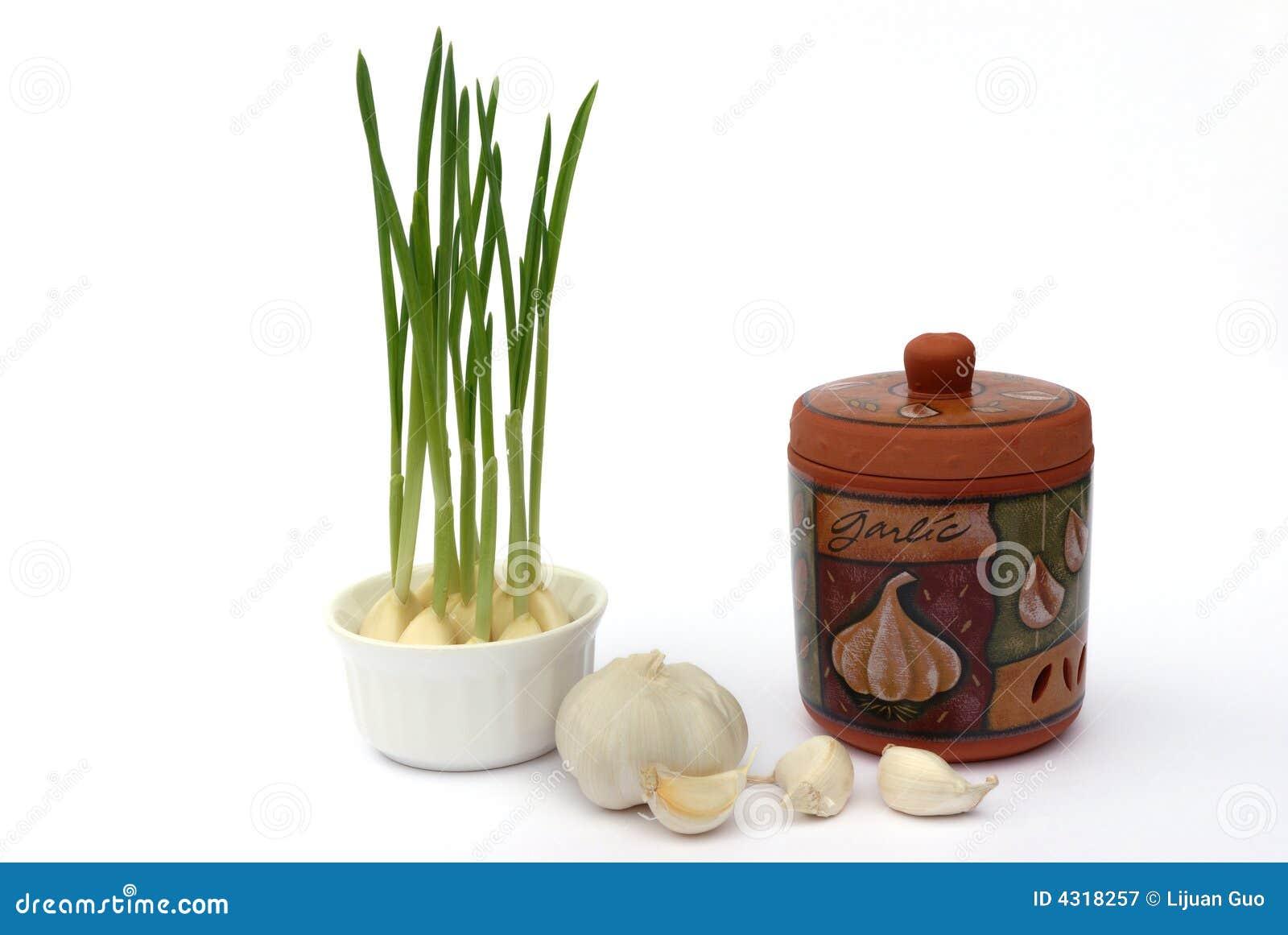 Garlic and garlic keeper