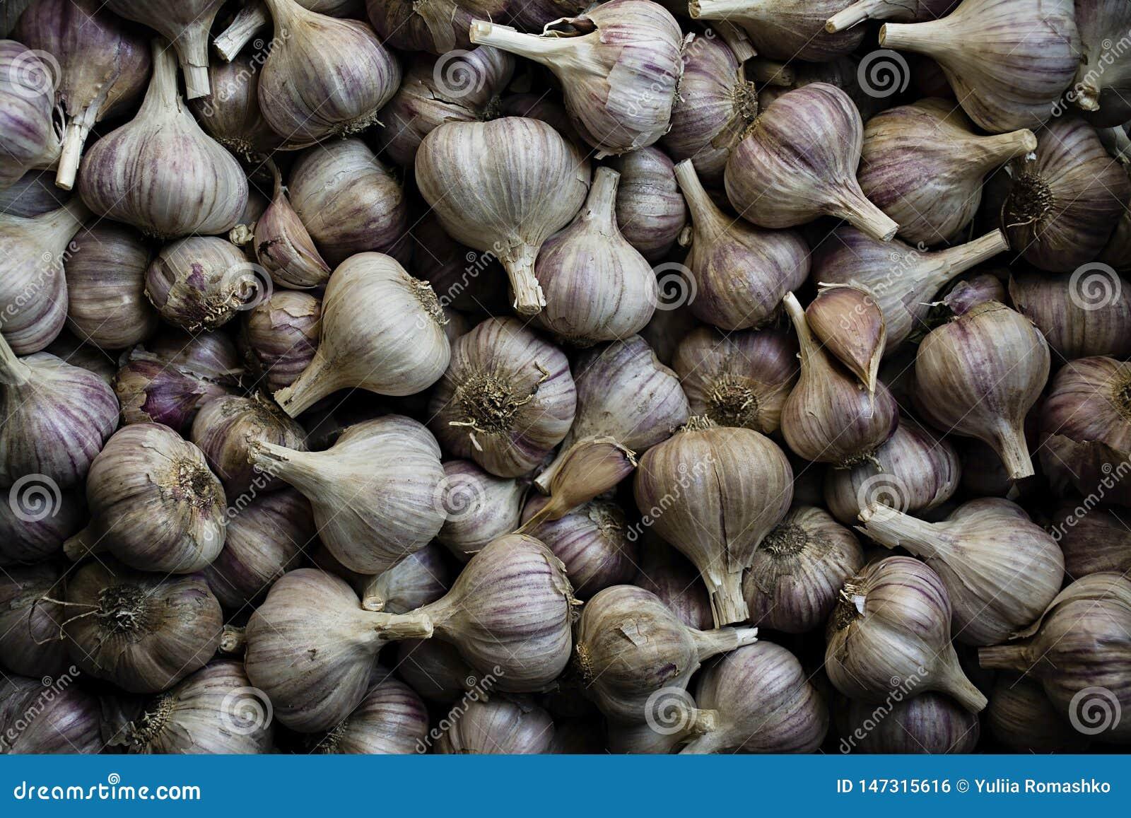 Garlic Muito alho para plantar Alho roxo