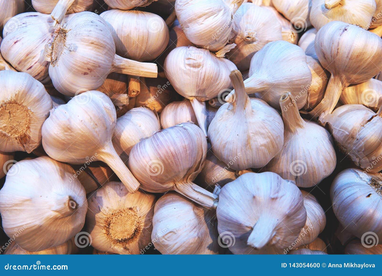 Garlic pile texture.