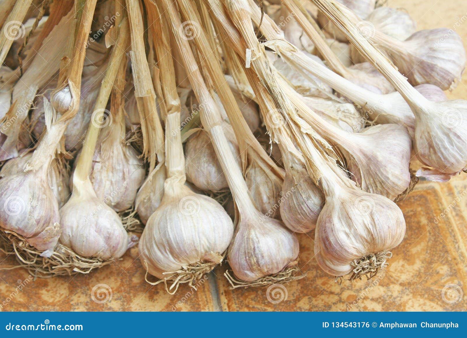 Garlic plant groups