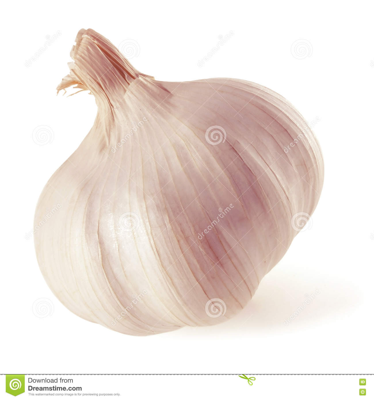 Garlic. Whole head of garlic.