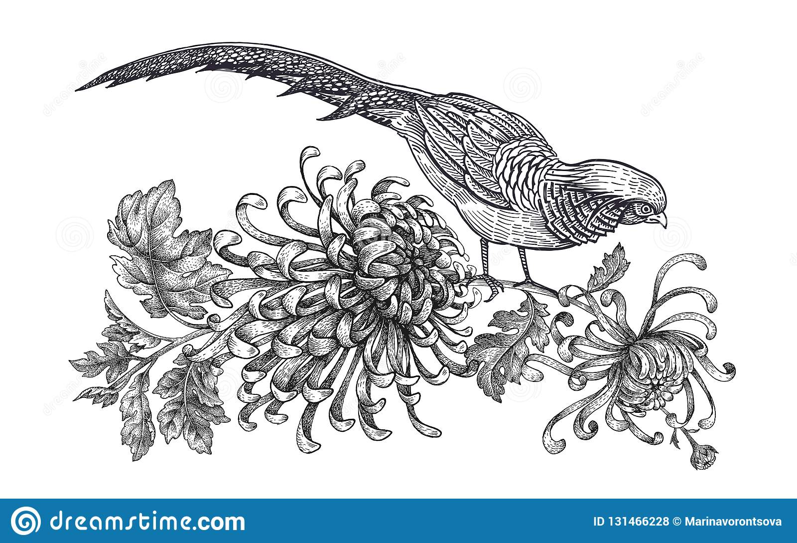 Garnering med fågeln och blommor Realistisk handteckningsfasan och krysantemum som isoleras på vit bakgrund vektor