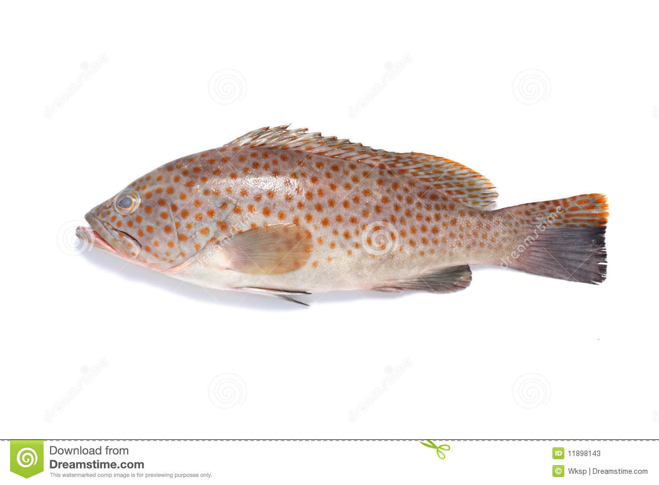 Garoupa fish stock image image of fish cuisine fins for Image of fish