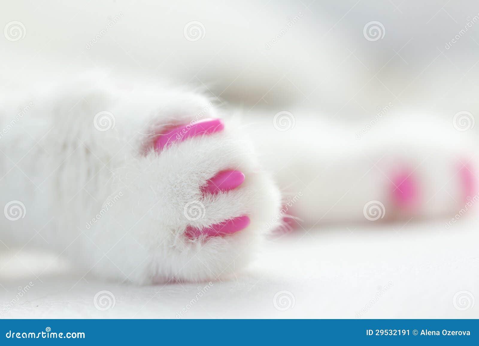 Garras macias para gatos