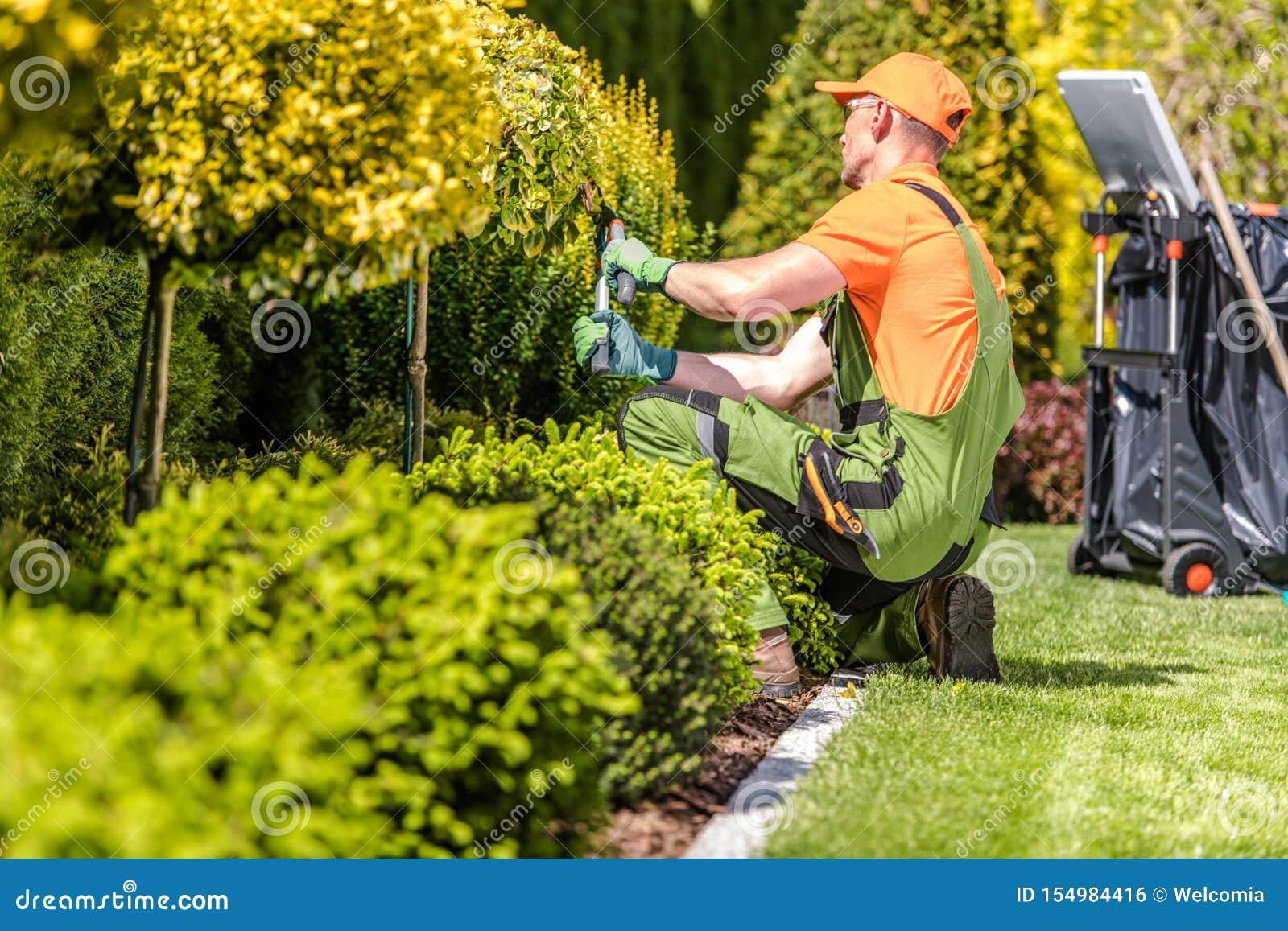 Garten-Arbeitskraft, die Anlagen trimmt