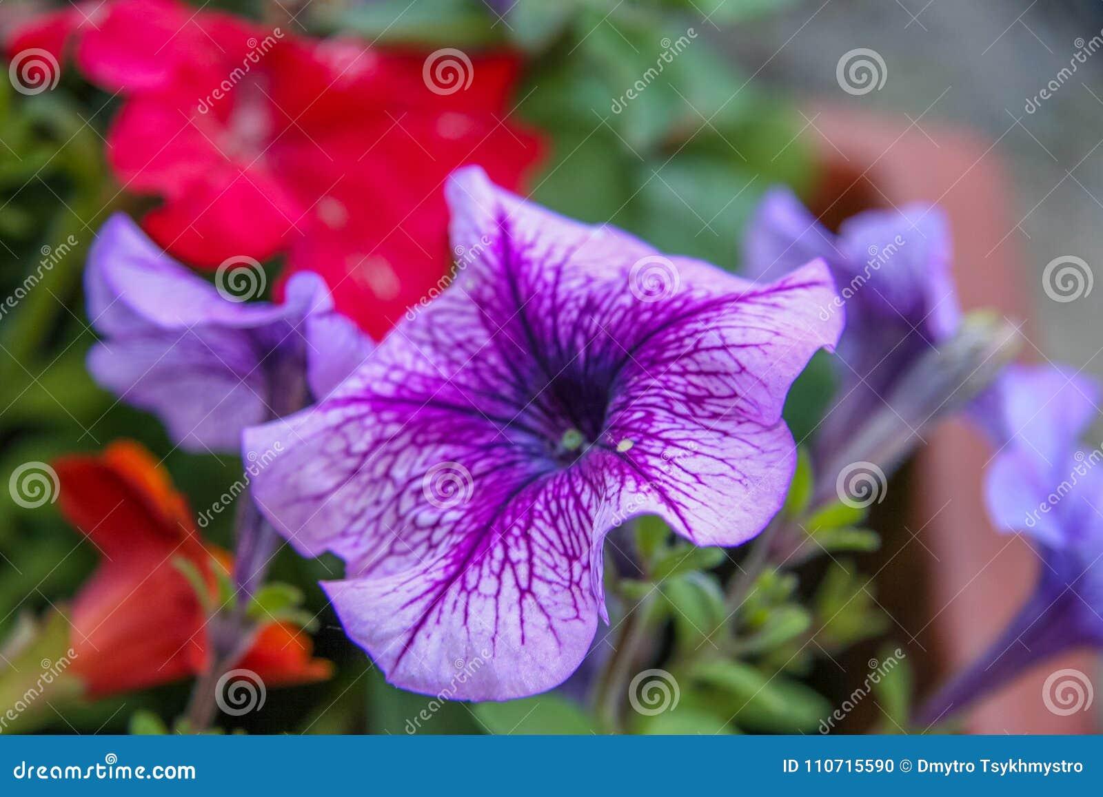 Faszinierend Blumen Mai Referenz Von Pattern Garten Der Im Frühjahr Im Stockfoto