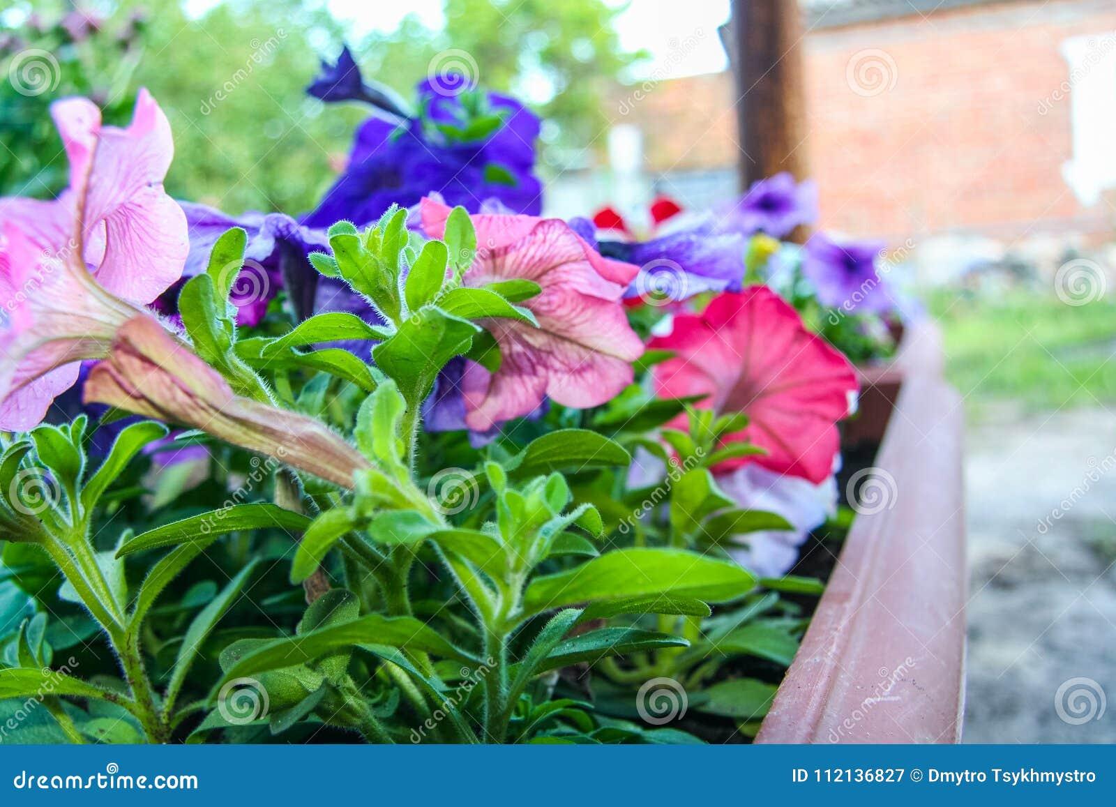 Exquisit Blumen Mai Dekoration Von Pattern Garten Der Im Frühjahr Im Stockbild