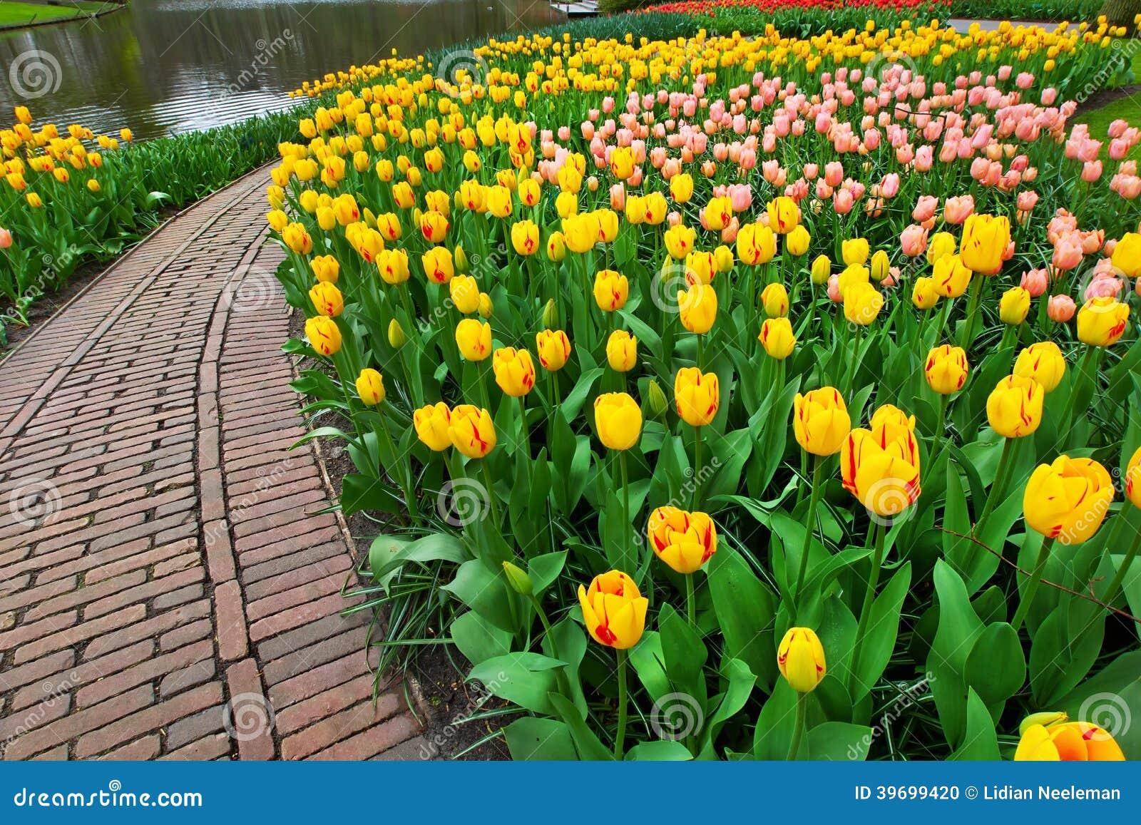 Garten der Tulpen im Frühjahr