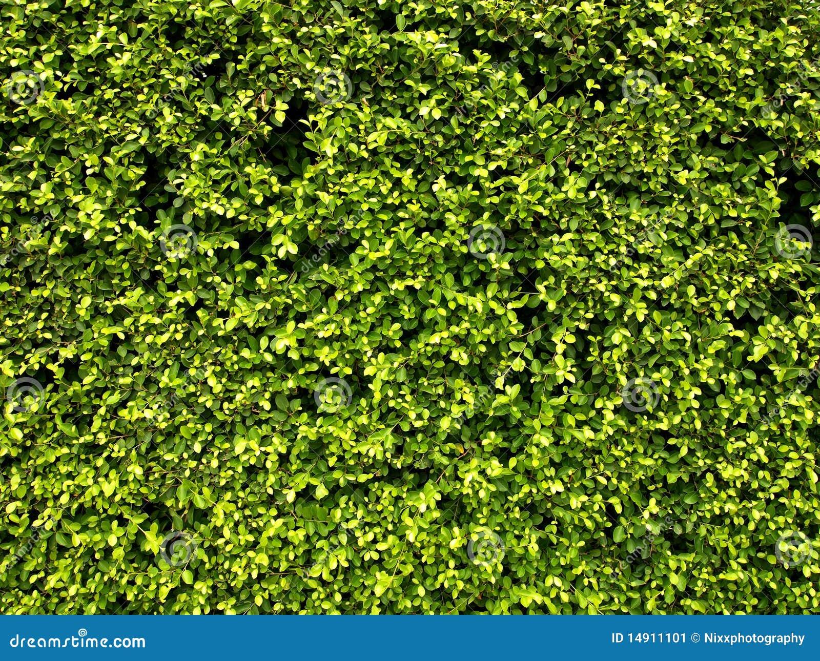 Garten Hecke Stockbild Bild