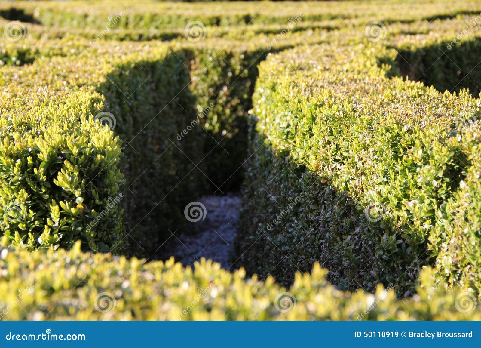 Garten Hecke Stockfoto Bild