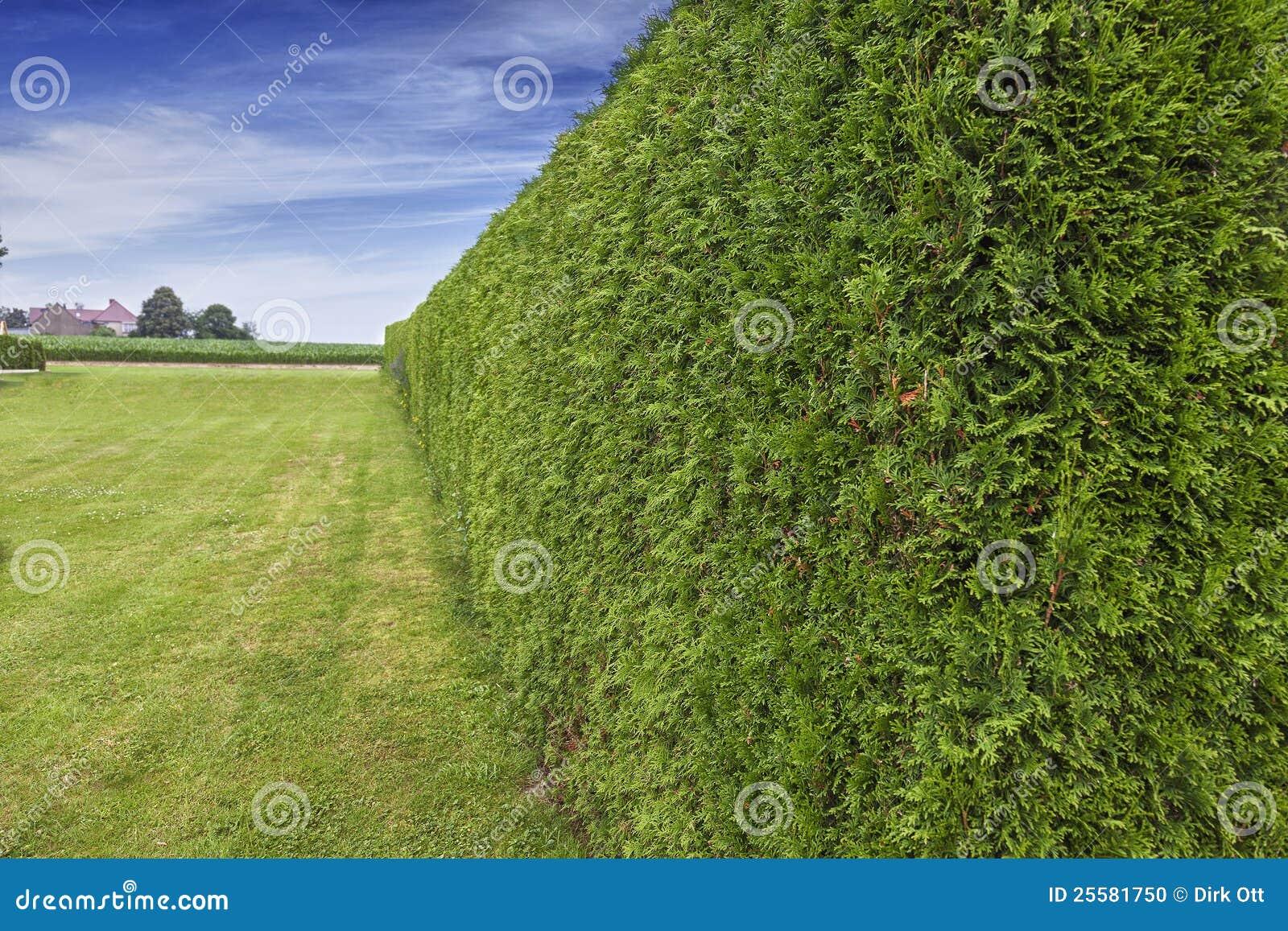 Gartenhecke stockfoto Bild von kostgänger grenze haupt