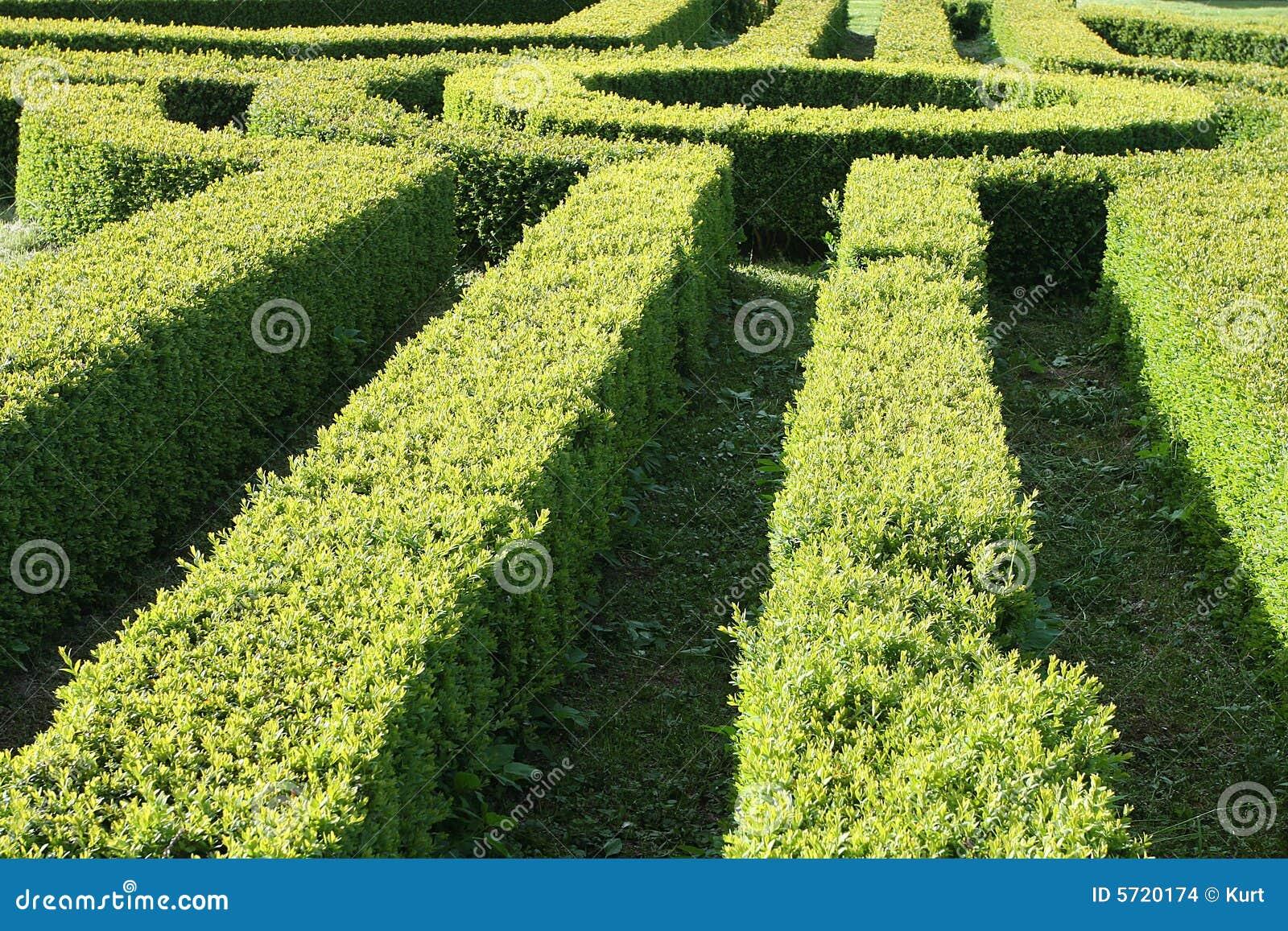 Gartenhecke Stockbilder Bild