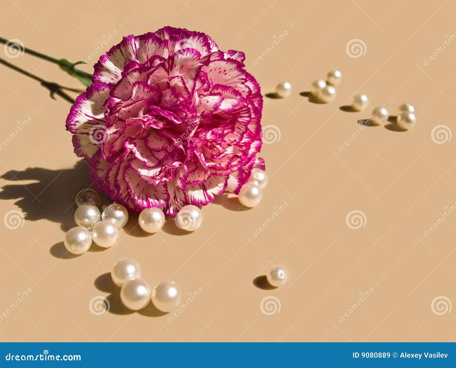Gartennelke und Perlen
