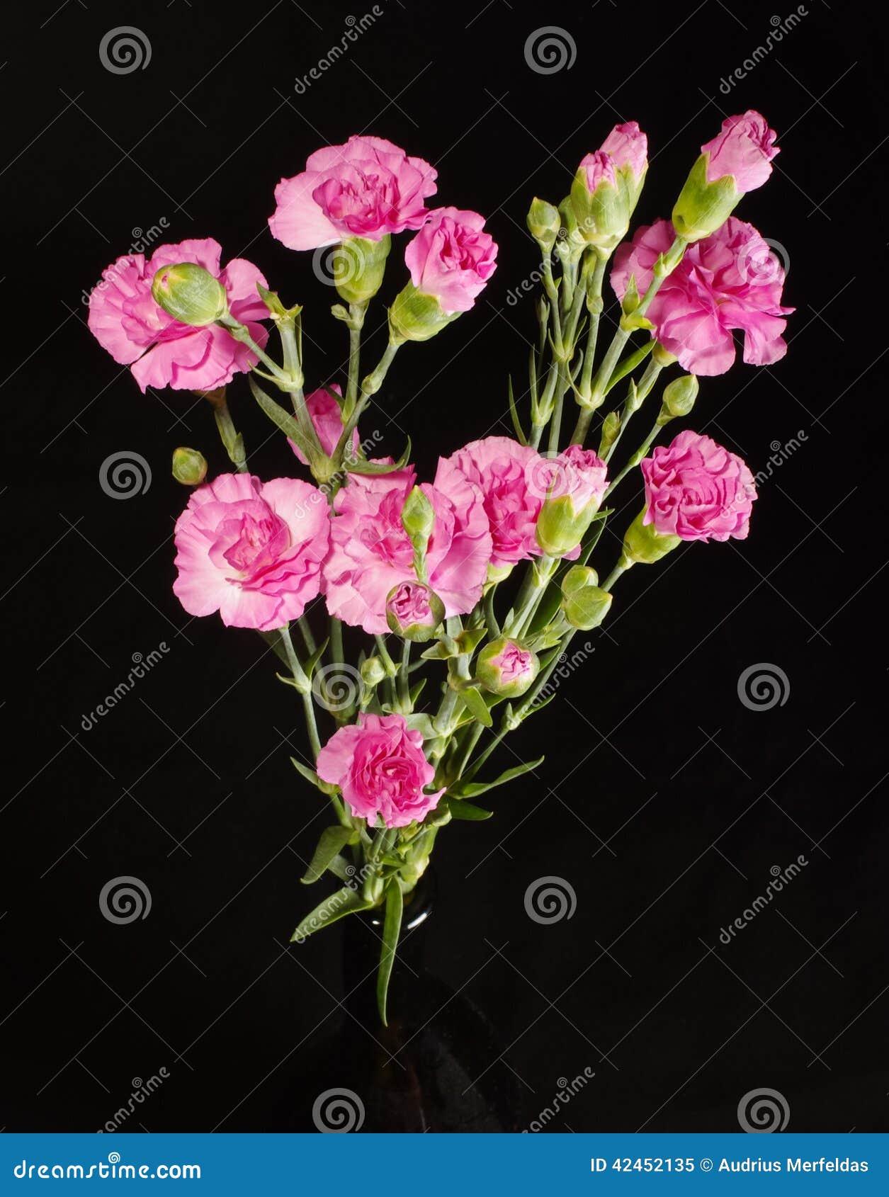 Gartennelkenblumen-Blumenstraußabschluß herauf Draufsicht