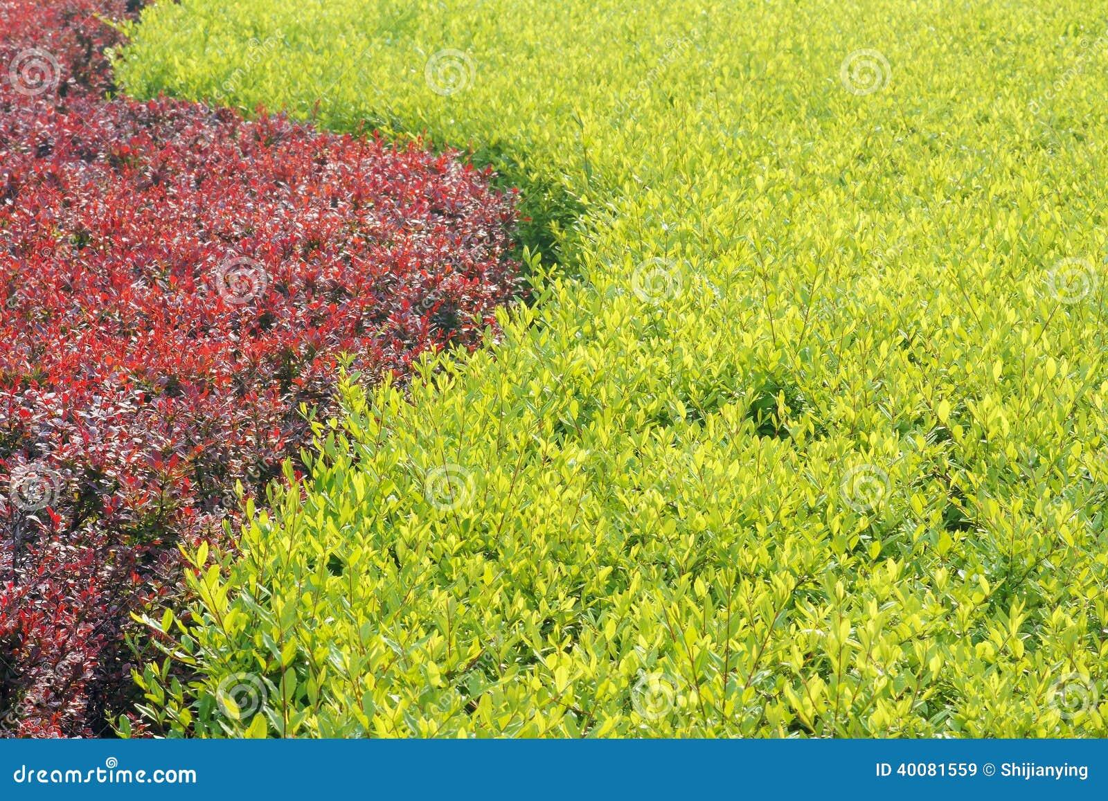 Gartenstrauch Stockbild Bild Von Busch Betrieb Gardening 40081559