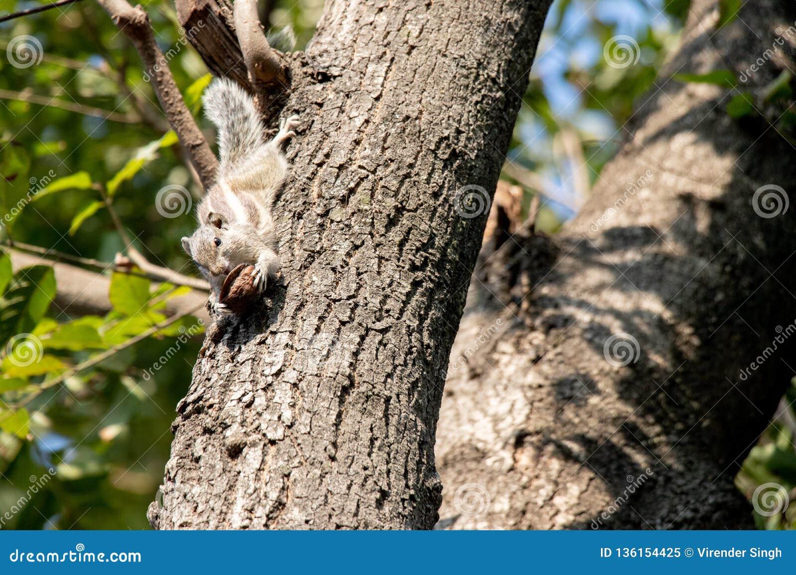 Gary ekorre som klamra sig fast intill ett träd
