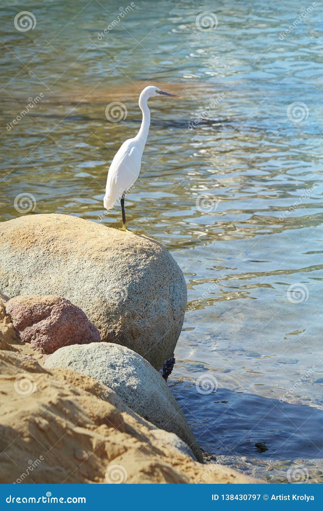Garza blanca en la piedra en una orilla de mar
