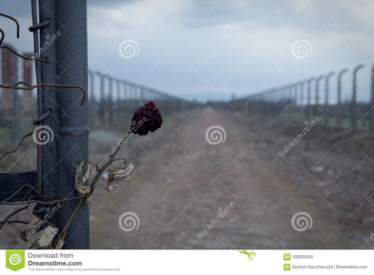 Gate To The Concentration Camp Auschwitz-birkenau. Barbed Wire Fence ...
