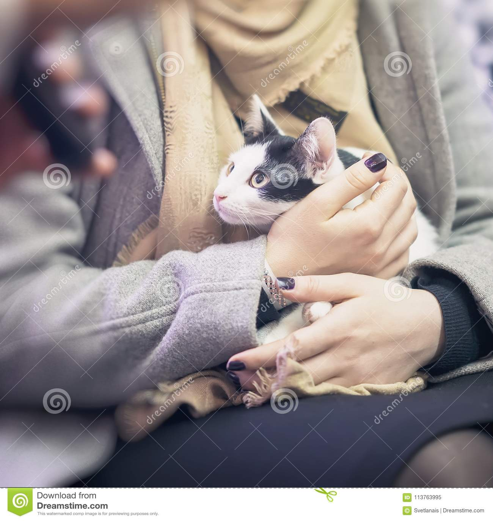 Gatinho amedrontado nas mãos do voluntário da menina, no abrigo para animais desabrigados A menina toma o gato a sua casa quadrad