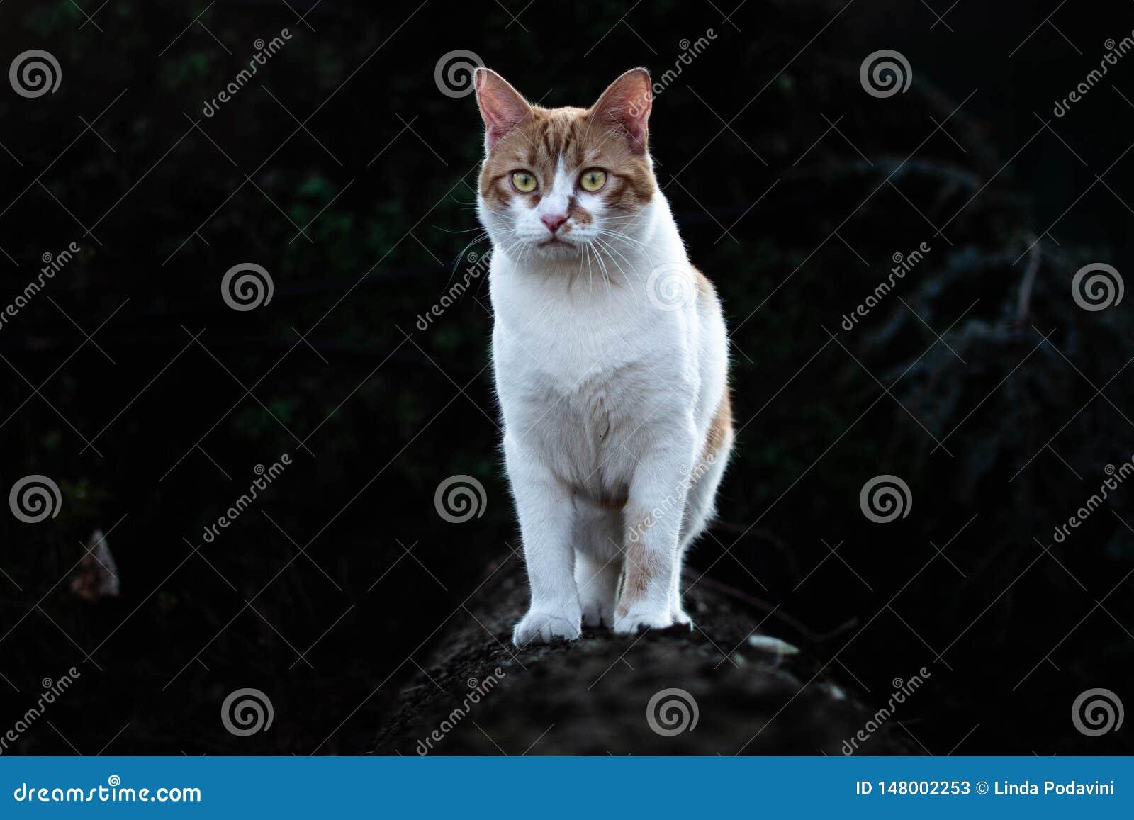 Gatinho branco e vermelho corajoso na floresta