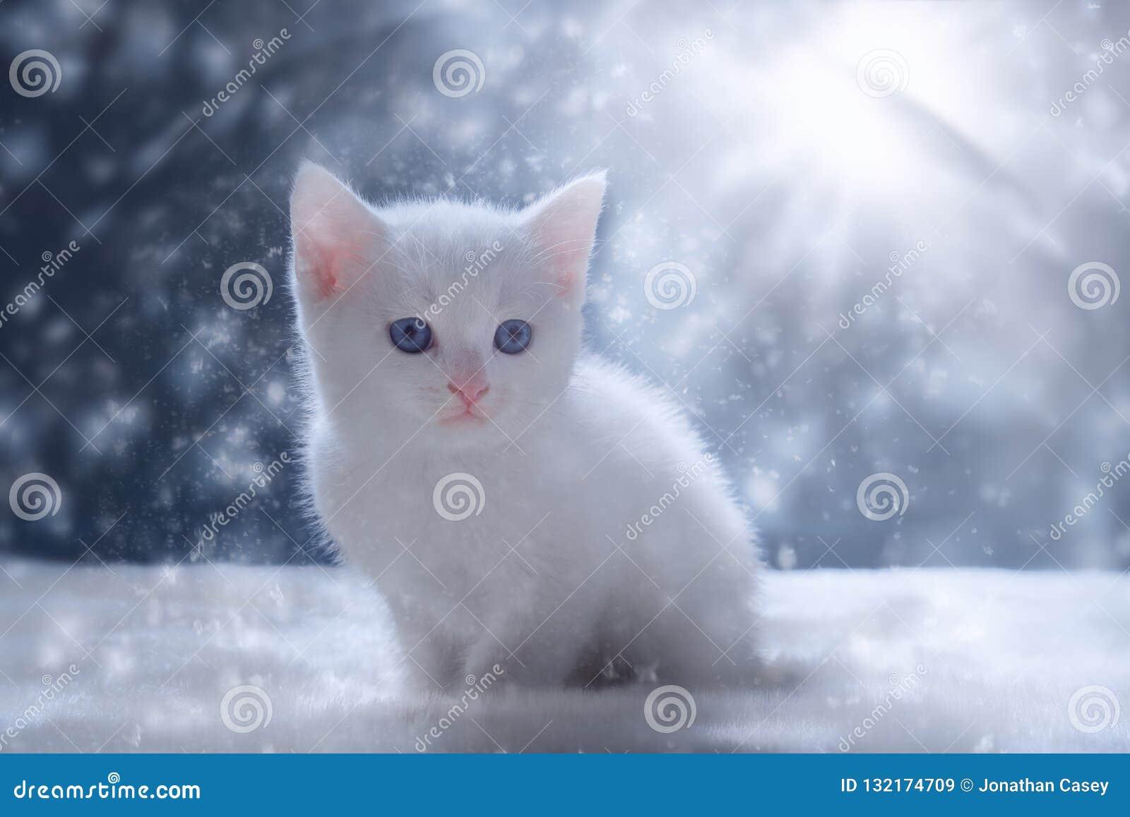 Gatinho branco na cena da neve