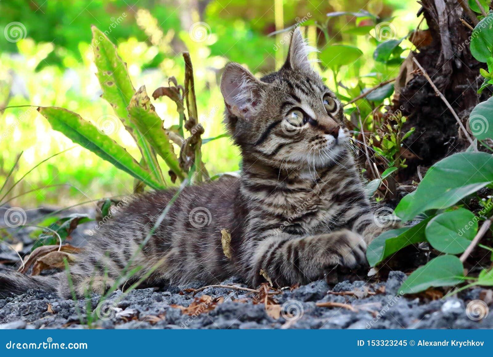 Gatinho cinzento que encontra-se para baixo sob uma árvore